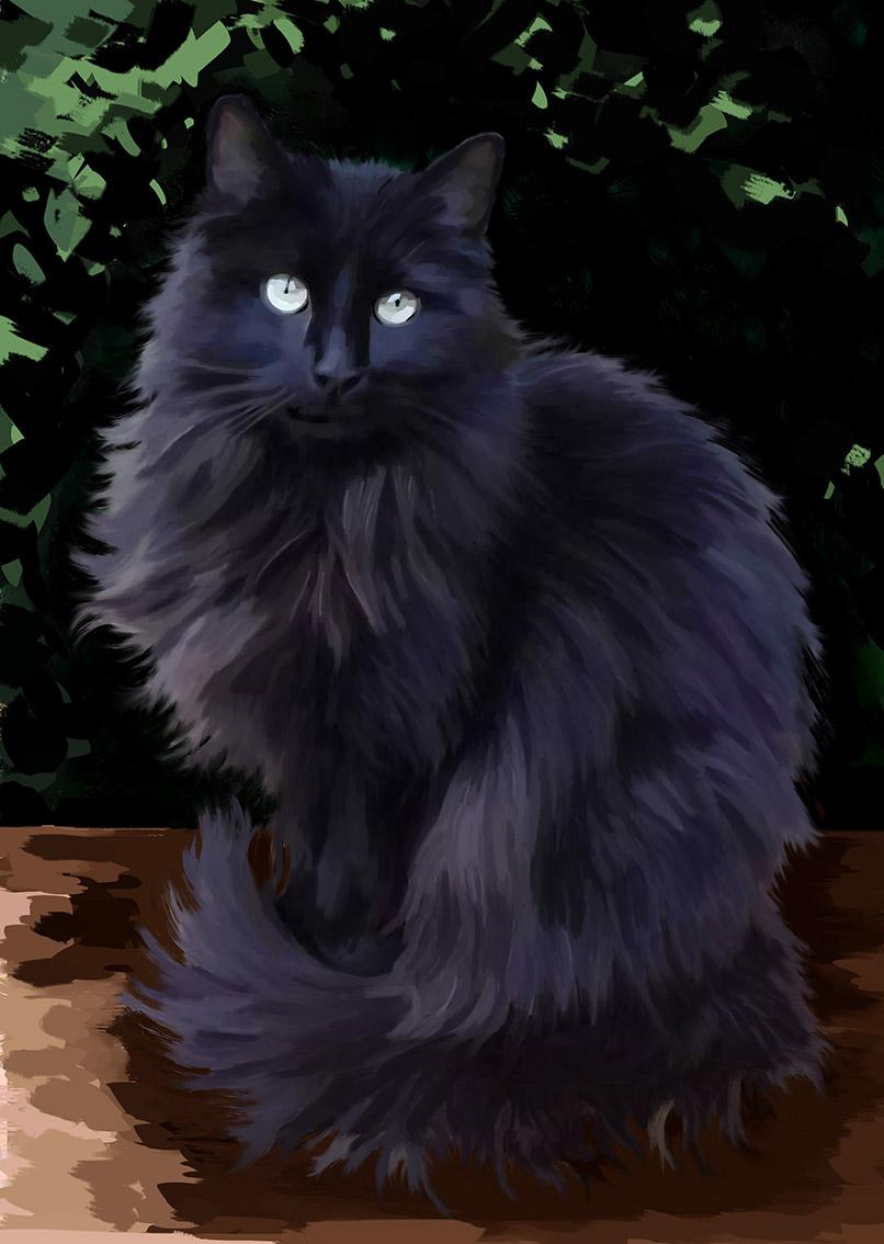 Chat noir à poils longs